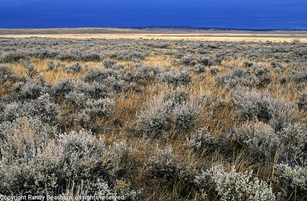 Sagebrush country and approaching storm. C.M. Russell National Wildlife Refuge, Montana