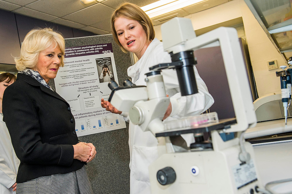Her Royal Highness in the lab with researchers (here with Dr Kate Webb) and looking at specemins through a microscope. The Duchess of Cornwall, Patron, Arthritis Research UK, visits and meets patients of the Adolescent Inpatient Unit at University College London Hospitals.  •	Her Royal Highness then tours a laboratory at the Arthritis Research UK Centre for Adolescent Rheumatology and meeting researchers and supporters. London 12 Feb 2015.