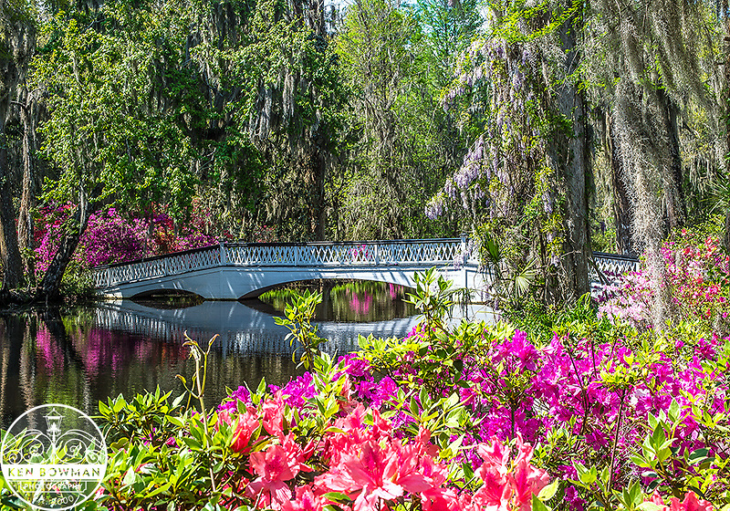 Magnolia Gardens bridge 2014.