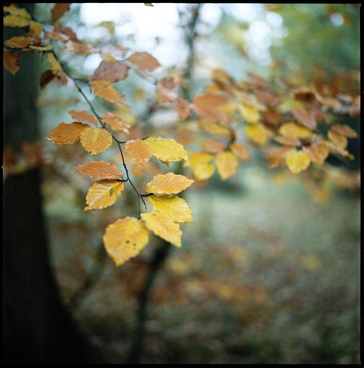 Winter Leaves, Thornham Walks, Suffolk, 2010