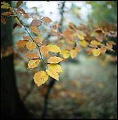 Winter Leaves, Suffolk | Colour