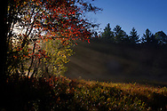 Sunrise through mist, fall, 2012