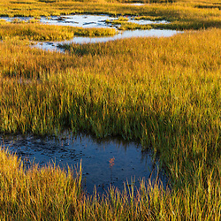 The Essex River salt marsh at the Cox Reservation in Essex, Massachusetts.