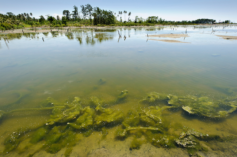 Tambak pond used to raise fish and shrimps, Sausu Peore, Central Sulawesi, Sulawesi, Indonesia.