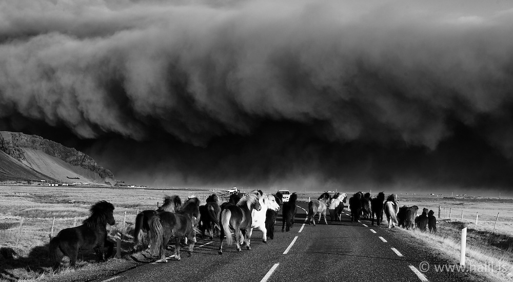Volcanic eruption, Eyjafjallajokull, Iceland. Horses and dark volcanic ash clouds