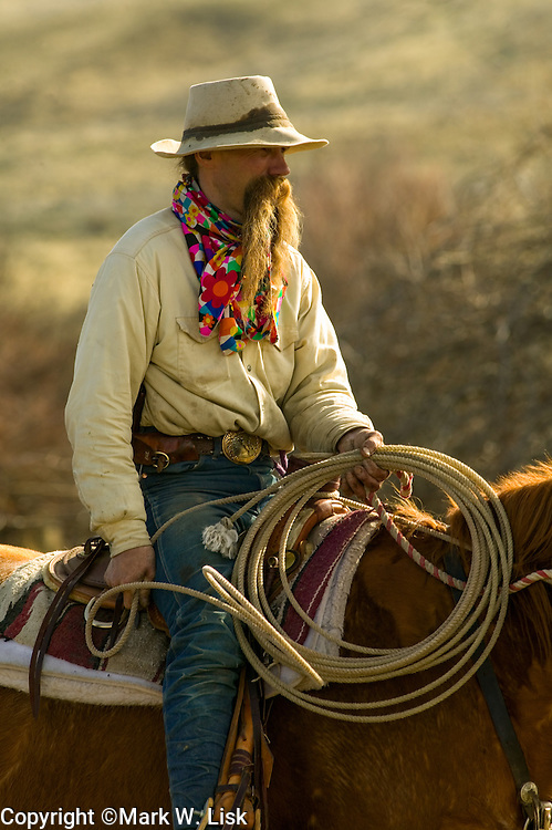 (MR) Duane, a ranch hand on the Hanley Ranch works cows at the spring branding, Jordan Valley, Oregon.