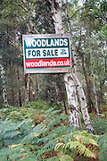 Sign on tree for woodland for sale, Hollesley, Suffolk, England