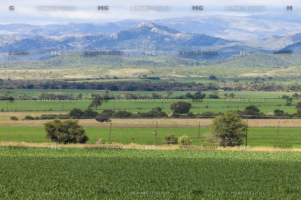 CULTIVOS Y VISTA HACIA LAS SIERRAS CHICAS, JESUS MARIA, PROVINCIA DE CORDOBA, ARGENTINA (PHOTO © MARCO GUOLI - ALL RIGHTS RESERVED)