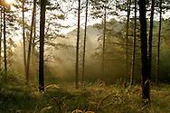 Forest near Burgh Haamstede, Netherlands.