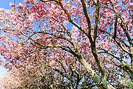 Cherry Trees, Further Lane, East Hampton, New York