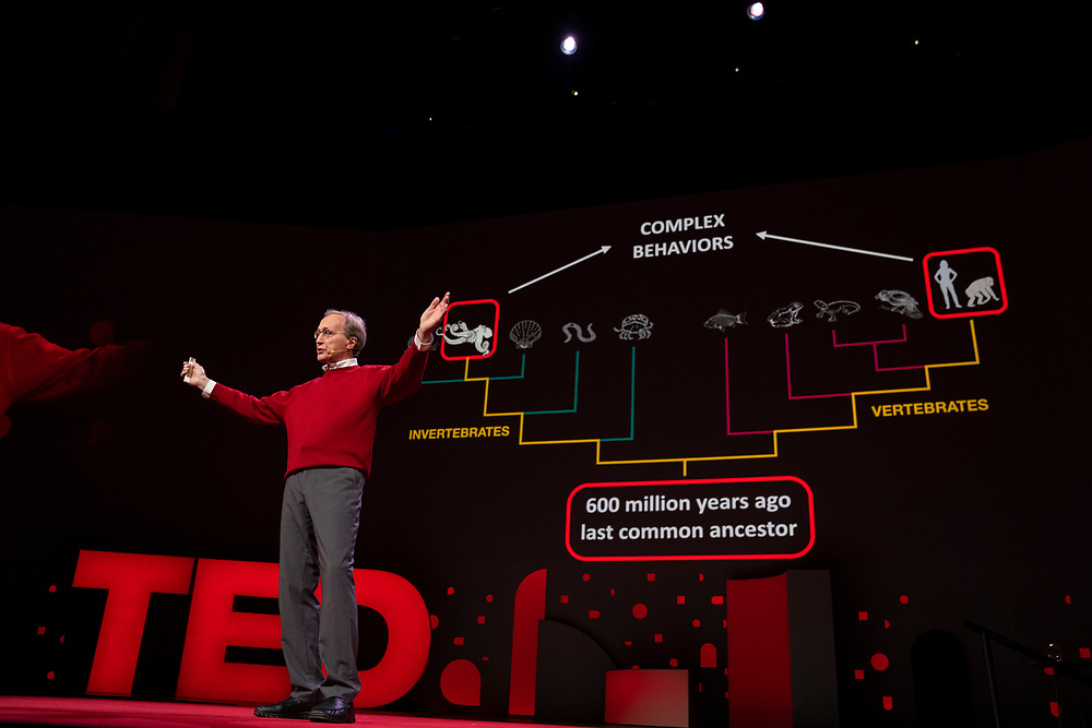 Roger Hanlon speaks at TED2019: Bigger Than Us. April 15 - 19, 2019, Vancouver, BC, Canada. Photo: Bret Hartman / TED