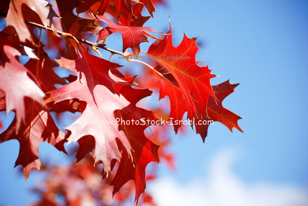 Autumn coloured leaves blue sky background