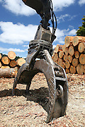 grapple of a log loader with a pile of timber logs in the New Zealand Forest at Mt Auckland