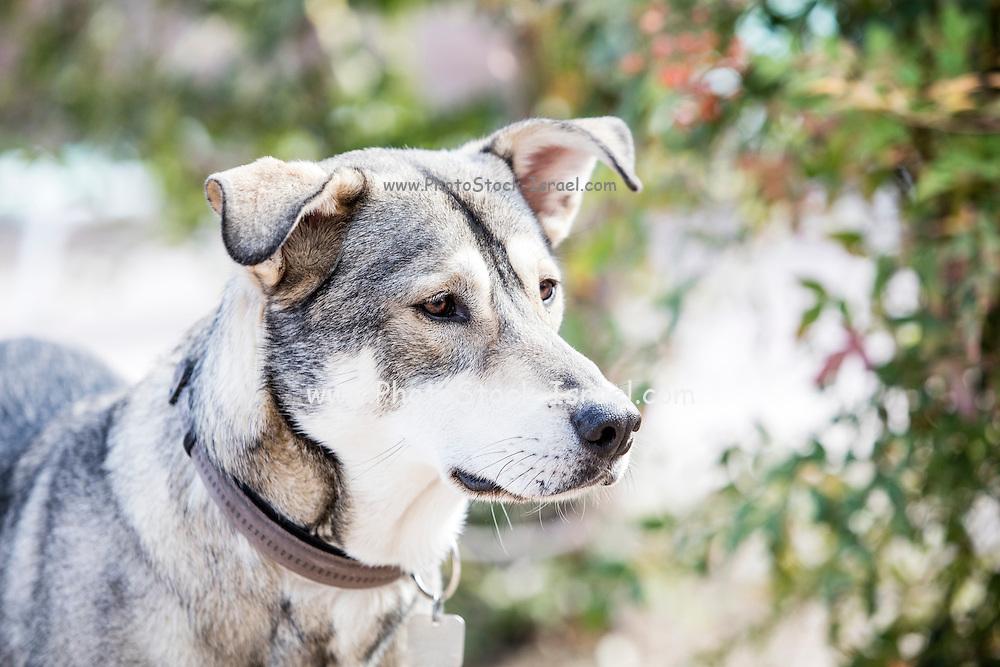 Close-up portrait of a mature dog