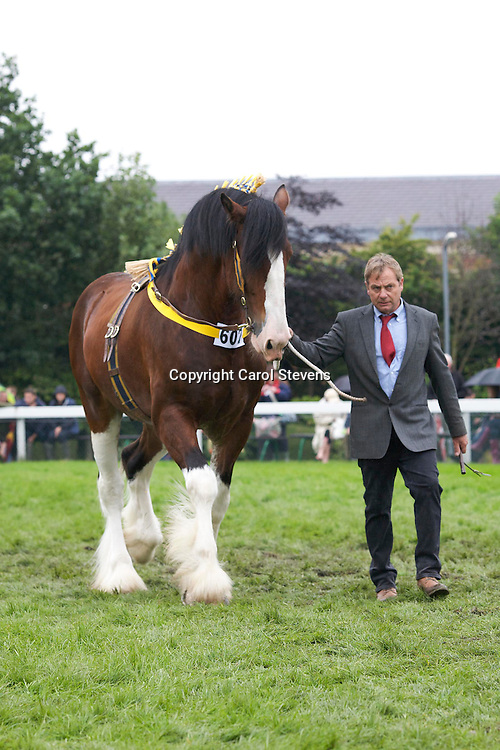 Champion Shire<br />