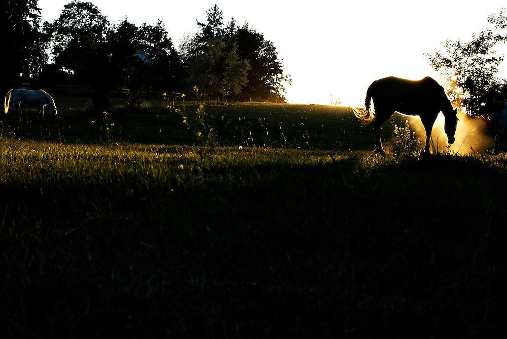 A horse at sunset in Coldstream, British Columbia on August 7, 2011.