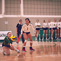 5th year outside hitter, Ashlee Sandiford (1) of the Regina Cougars during the Women's Volleyball home game on Fri Jan 25 at Centre for Kinesiology, Health & Sport. Credit: Arthur Ward/Arthur Images