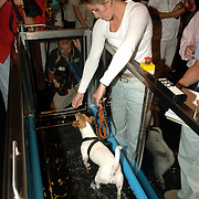 NLD/Amsterdam/20060716 - Opening Cesar Wellness Centre voor honden, aquajoggen voor honden