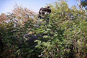 The tank that in 1984 leaked the poisonous gas-cloud that invested the city of Bhopal, Madhya Pradesh, India, in 1984, killing thousands, is laying abandoned among overgrowing vegetation in a yard inside the Union Carbide (now DOW Chemical) industrial complex, site of the infamous '1984 Gas Disaster', a tragic event that today continues to consume people's lives.