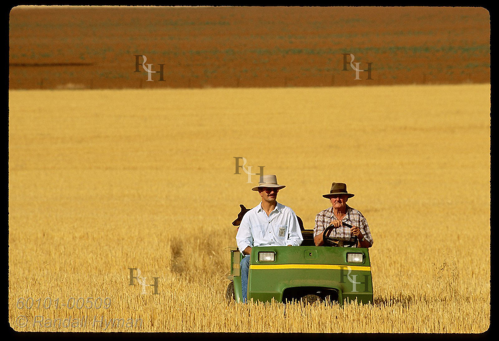 Farmer drives all-terrain vehicle thru golden field of alfalfa stubble; Coolamon, N South Wales Australia