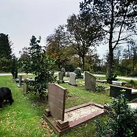 Nederland, Bergen , 7 november 2013.<br /> begraafplaats van Bergen.<br /> <br /> Foto:Jean-Pierre Jans