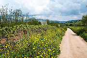 Israel, nature trail