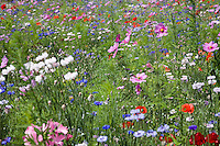 Wildflowers in meadow