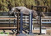 Horse No 52