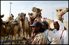 Apr 19 2013 Camel Racing in Doha