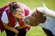 Rural sheep and Horses