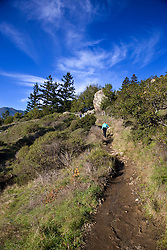 A woman hikes up a hill on a dirt trail, Muir Woods National Monument, Marin County, California, United States of America