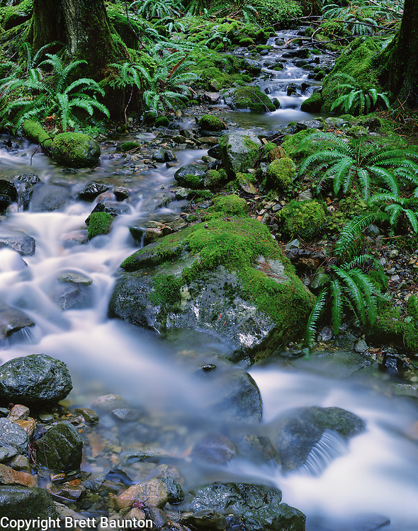 Creek flowing through verdant forest into Nooksack River Valley, Mt. Baker National Forest, Washington
