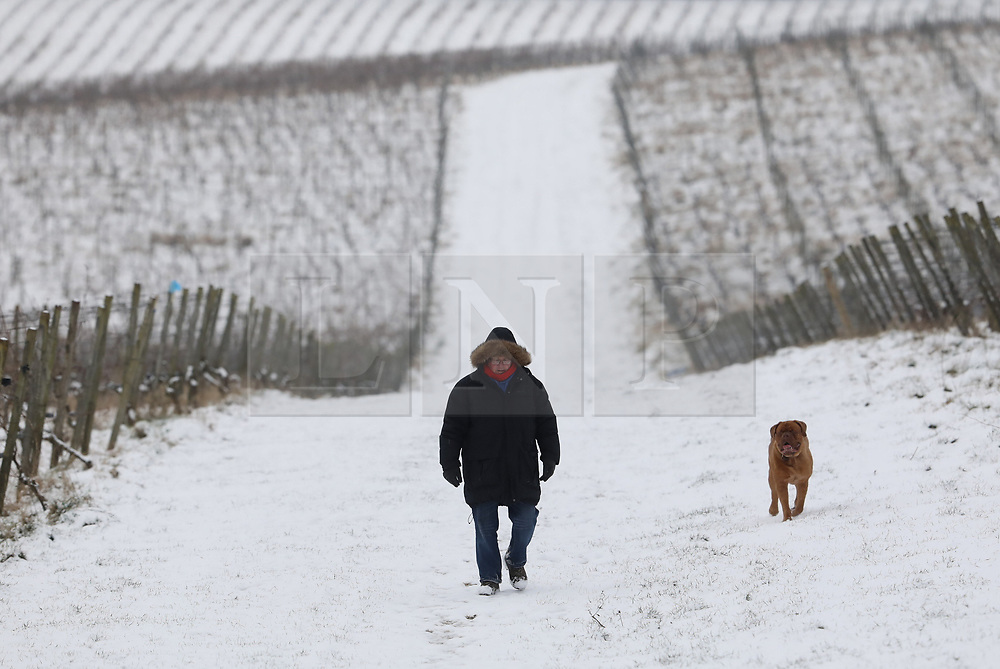 © Licensed to London News Pictures. 18/03/2018. Dorking, UK. A man walks his dog through Denbies Vineyard after overnight snow and freezing temperatures. Amber weather warnings remain in place for parts of the UK for a second day. Photo credit: Peter Macdiarmid/LNP