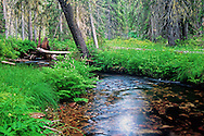 Hungery Creek in summer. Lewis & Clark National Historic Trail. Clearwater National Forest, north Idaho.