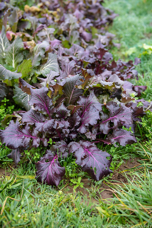 Vibrant Ultra Violet from Wild Garden Seed