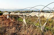 09 July 2016, Lamezia Terme Italy - A field burned by ndgrangheta.
