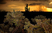 A sunset during a monsoon shower is seen from Sahuarita in the foothills of the Santa Rita Mountains, a Sky Island in the Coronado National Forest, Sonoran Desert, Arizona, USA.