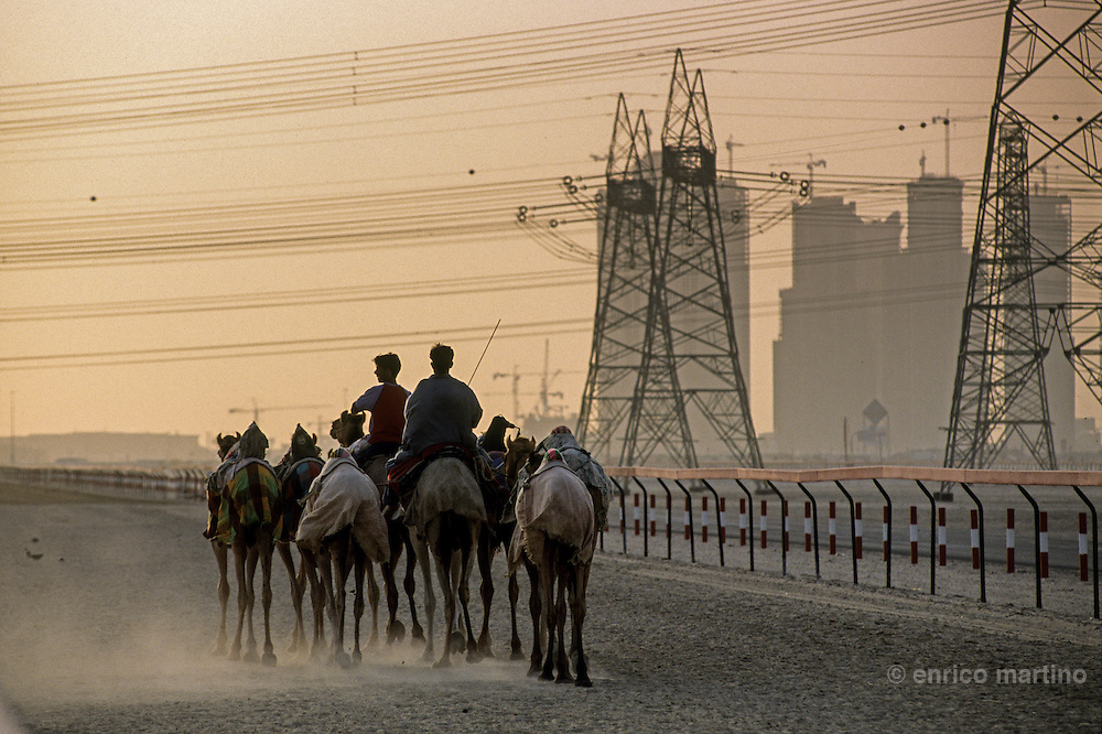 Nad al-Sheba racecourse, the royal family dromedaries training in late afternoon. In the back the new skykline of Sheick Zayed rd.