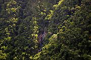 Waterfall in tropical rainforest, Queensland, Australia