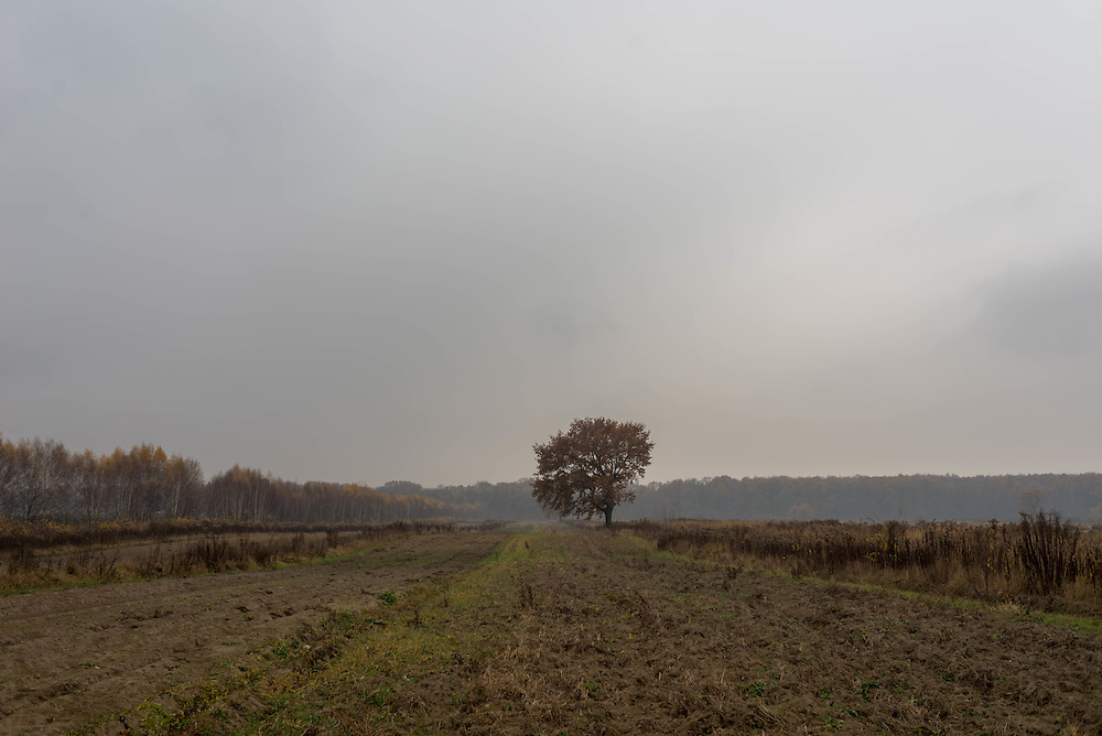 A lone tree sits in a Polish field, Autumn 2014