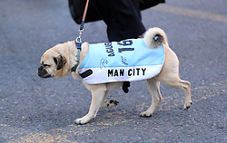 A dog wearing a Man City signed Aguero coat during the trophy parade in Manchester.