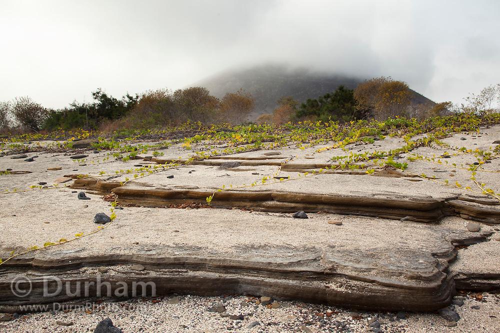 Intersting rock erosion along the shore of Santiago Island, Galapagos Archipelago - Ecuador.
