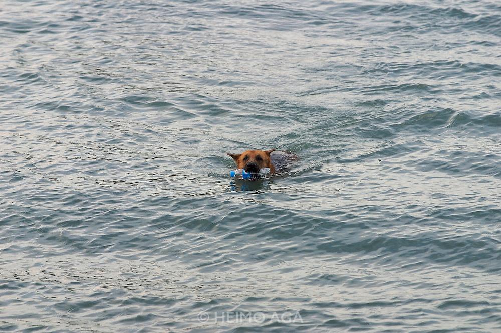 Hat Bo Phut (beach). Dog with plastic bottle.