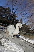 China, Beijing, Ming Dynasty Tombs, Changling Tomb, statues of a camel lining the sacred way