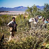 Raptor Free Flight at the Arizona-Sonora Desert Museum