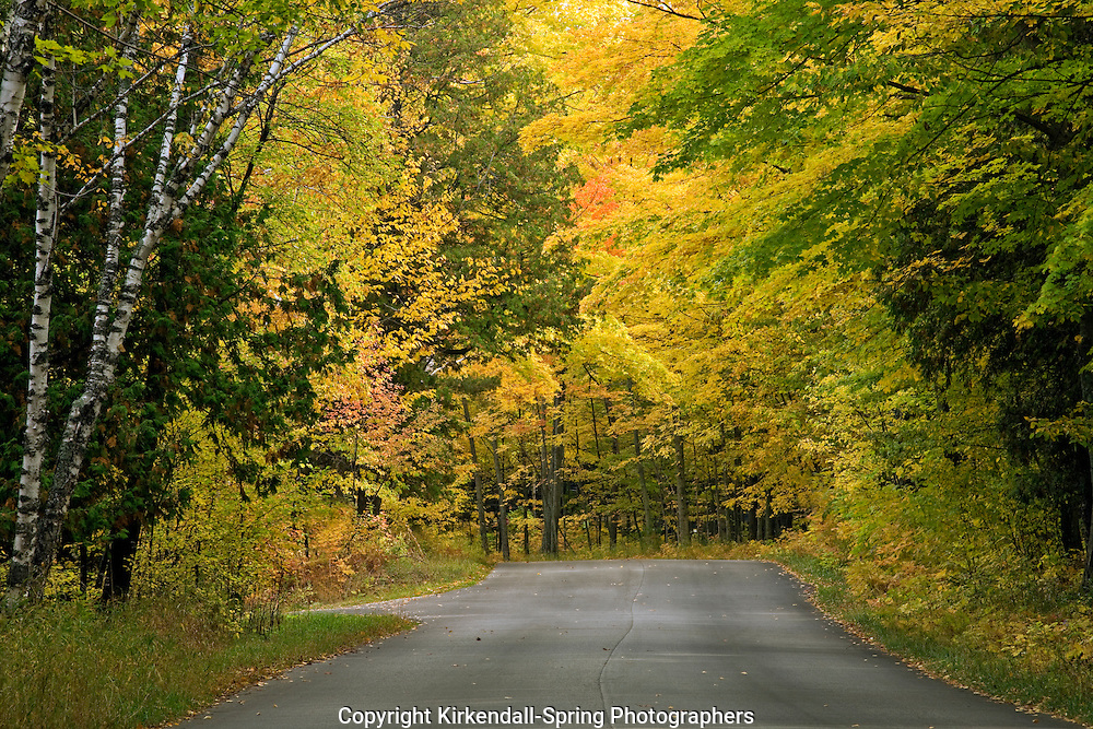 WI00108-00...WISCONSIN - Autumn color along a forested road in Peninsula State Park in Door County.
