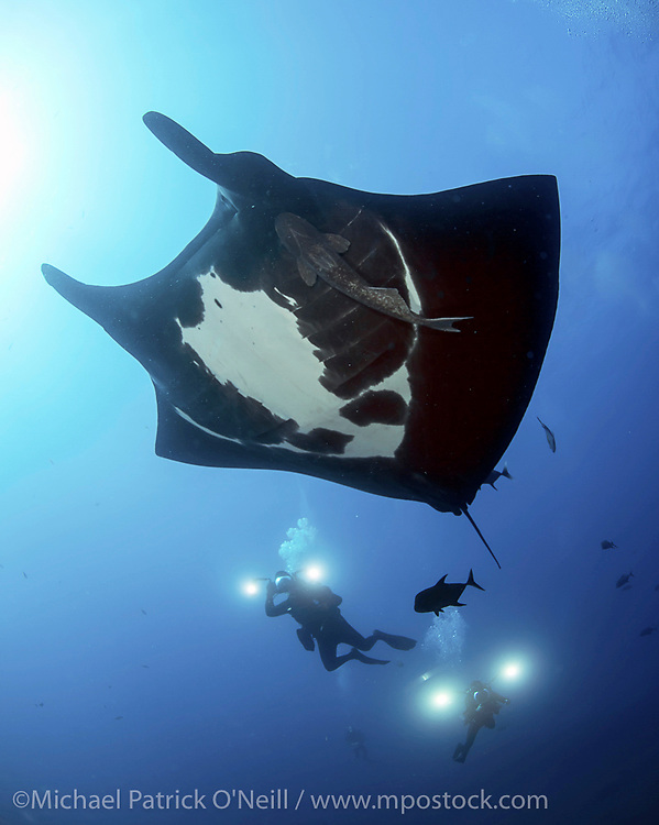 Underwater photographer and Giant Pacific Manta Ray, Manta birostris, swim side by side in the Revillagigedo Archipelago, roughly 220 miles south / southwest of Cabo San Lucas, Mexico.