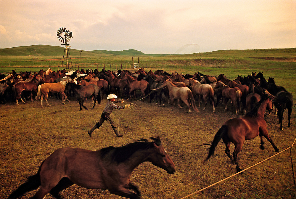 Roping horses for the days work on a ranch in the Sandhills of Nebraska
