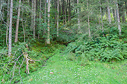lush green foliage on a forest floor. Photographed in Tirol Austria.