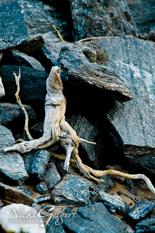 Organic, twisting dry tree root against sharp black rocks, Namibia, Africa. Fine art photography prints, nature photography, wall art.